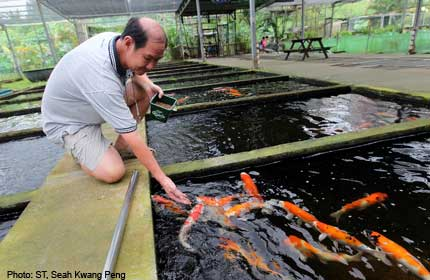 13 fish farms in Pasir Ris to close by the end of 2014