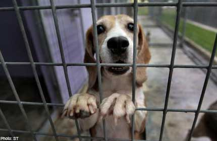 80 dogs up for adoption in largest such drive