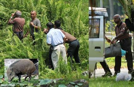 Boy in wild boar attack thrown 1m away