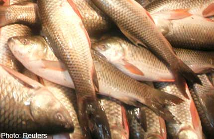 Why fish consumption can be both good and bad for you for Why fish is bad for you