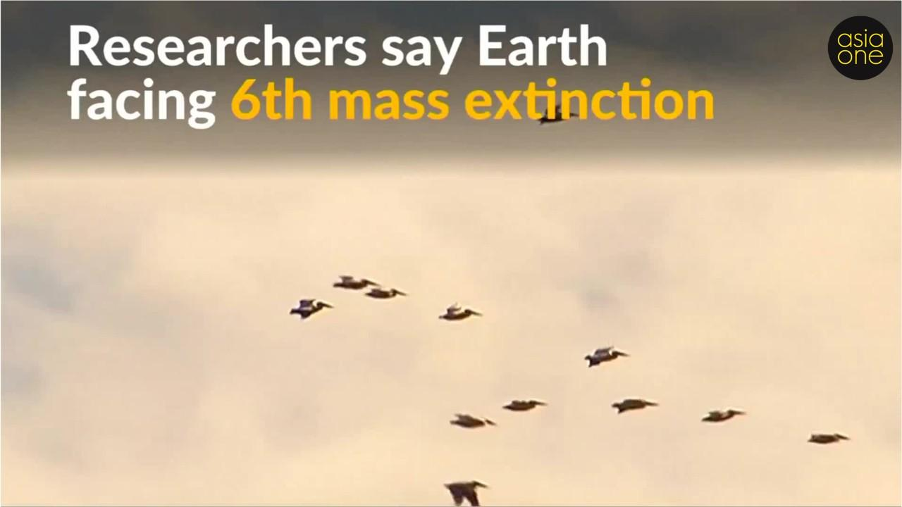 earth faces a sixth mass extinction essay