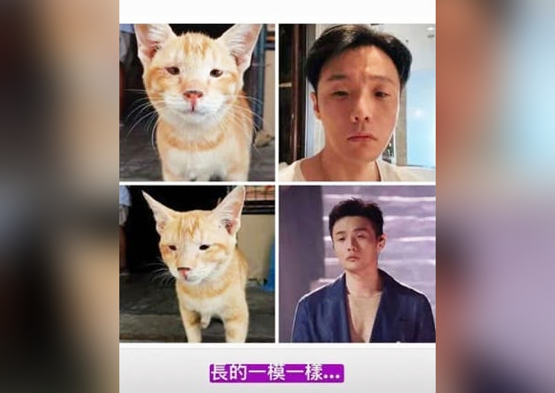 Rainie Yang's 'Forced Separation' From Husband Li Ronghao Drags to 6 Months, Posts This Joke to Him