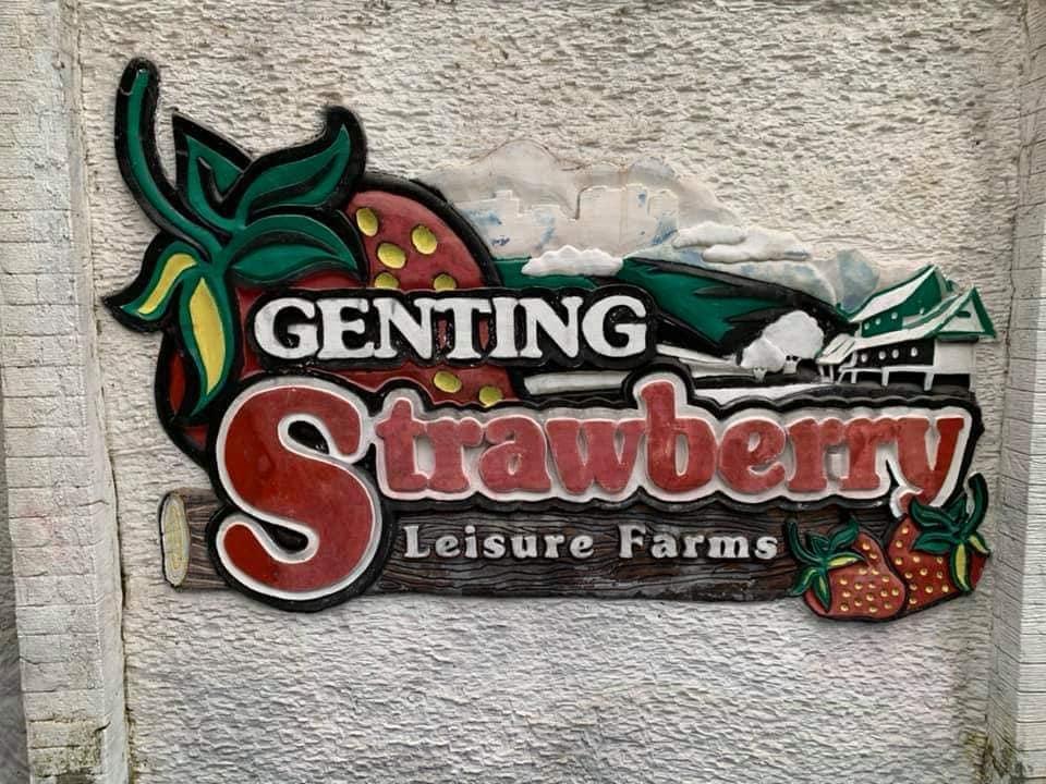 Wisata petik stroberi di Kebun Stroberi Genting
