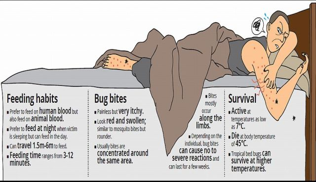 Sleeping with the enemy: Bed bugs a painful nightmare