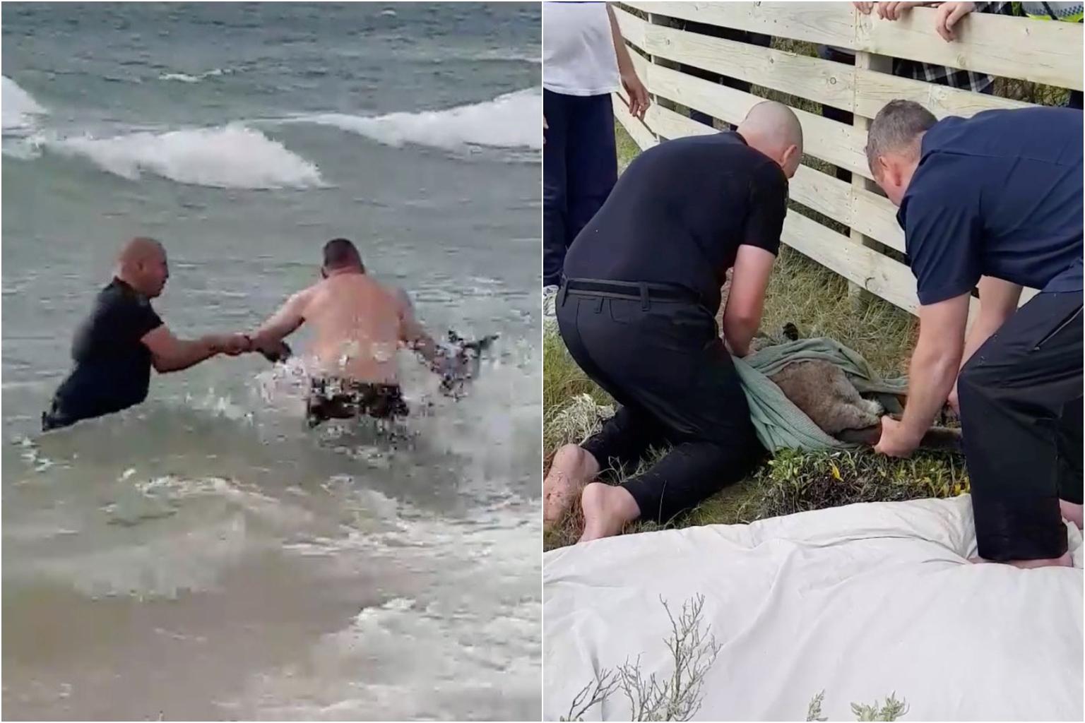 Police in Australia rescue drowning kangaroo