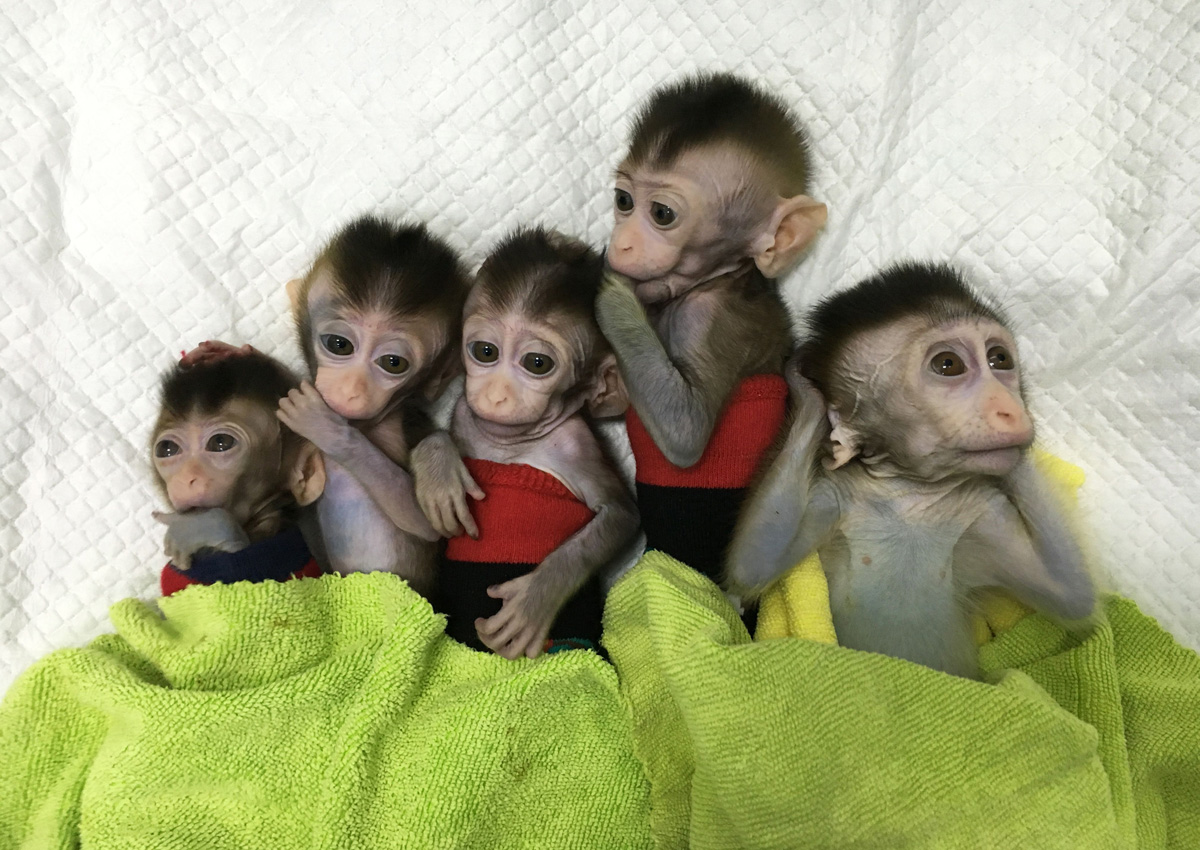 Chinese 'Unethical' Experiment on Monkeys Shows Human-Like Brain Development