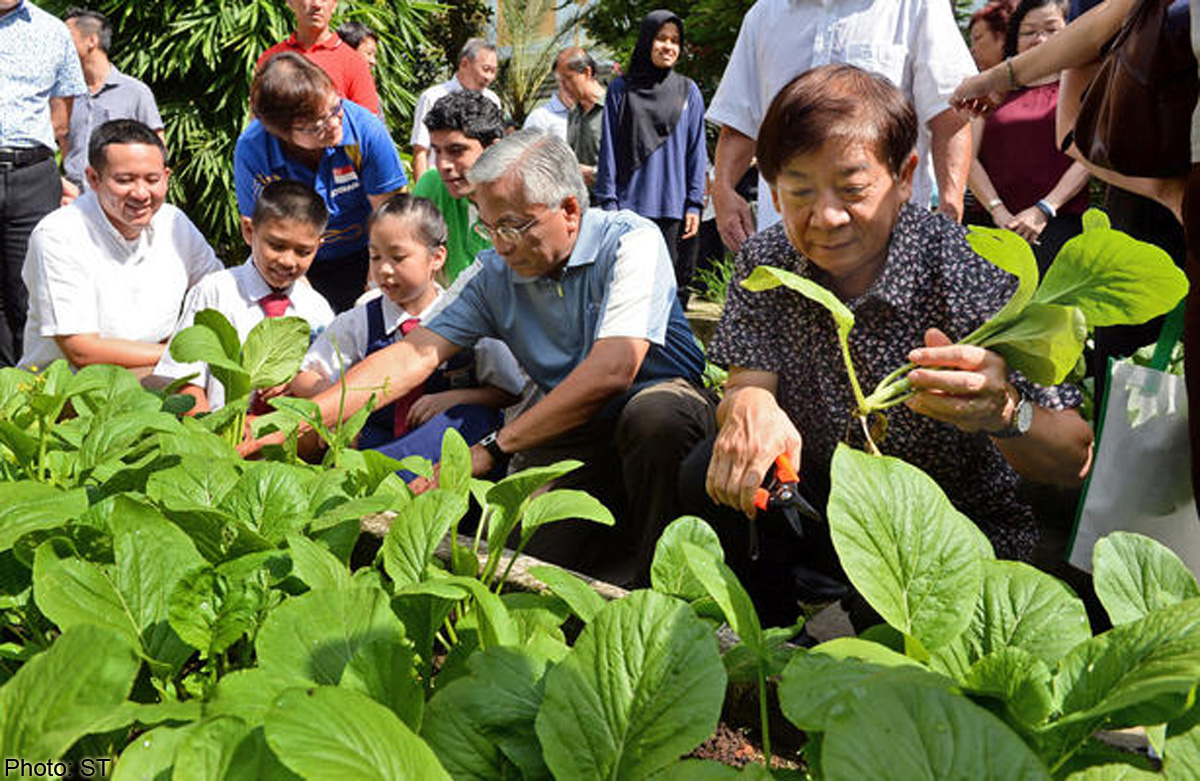Community gardens help feed the needy, Singapore News - AsiaOne