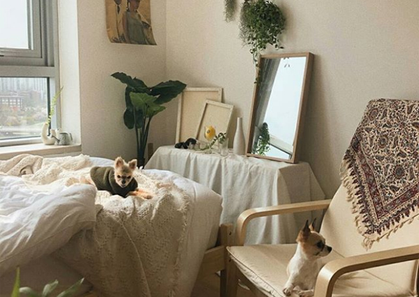 Young Koreans maximise small rooms with cosy interiors, Asia ...