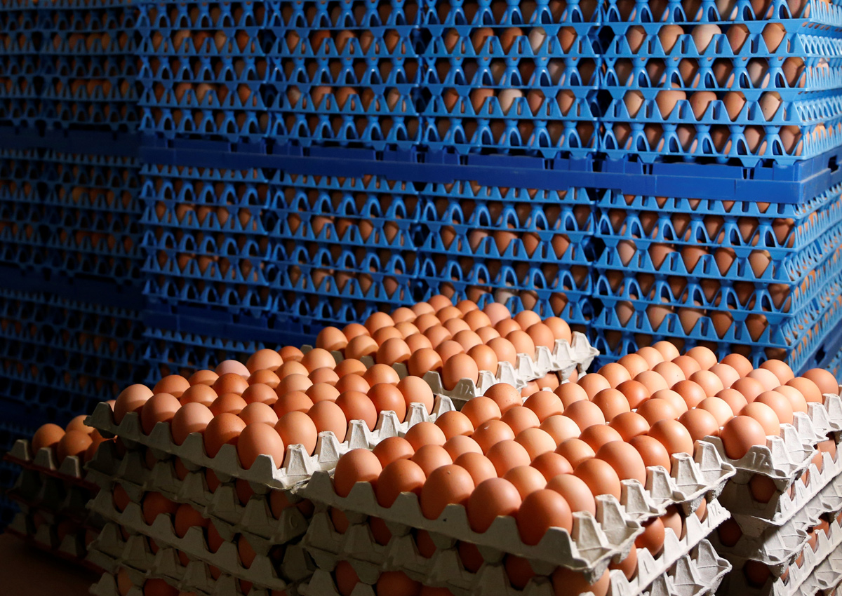 Korean retailers stop egg sales after fipronil found in some eggs, Asia  News - AsiaOne