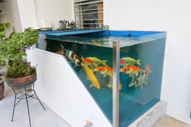 Tampines Hdb Residents Keep Koi Fish In Pond Built Into