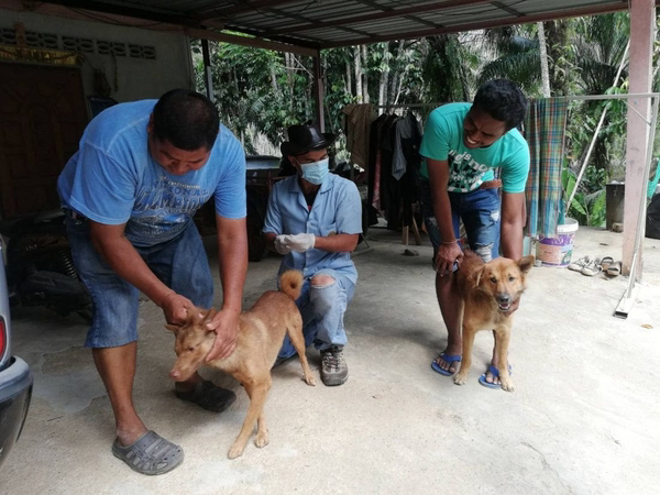 10 Krabi villagers under watch for possible rabies infection