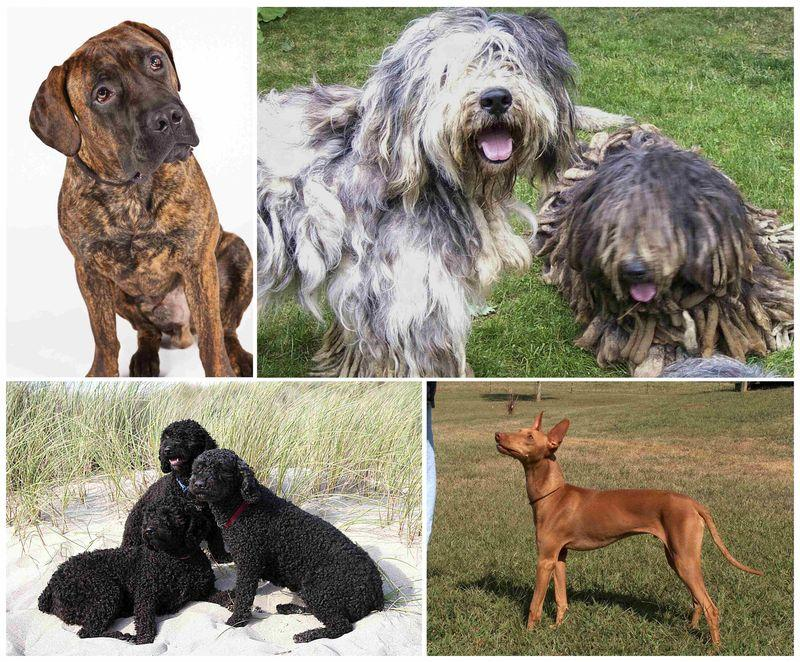akc dog breeds A list of the top 100 dog breeds below you will find the top 100 dog breeds ranked by popularity given by the number of registrations at the american kennel club.