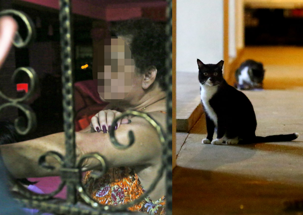 Yishun cat abuse case: Mother of suspect shocked by allegations