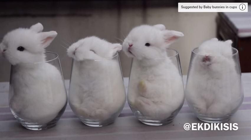 in Cute cups bunnies