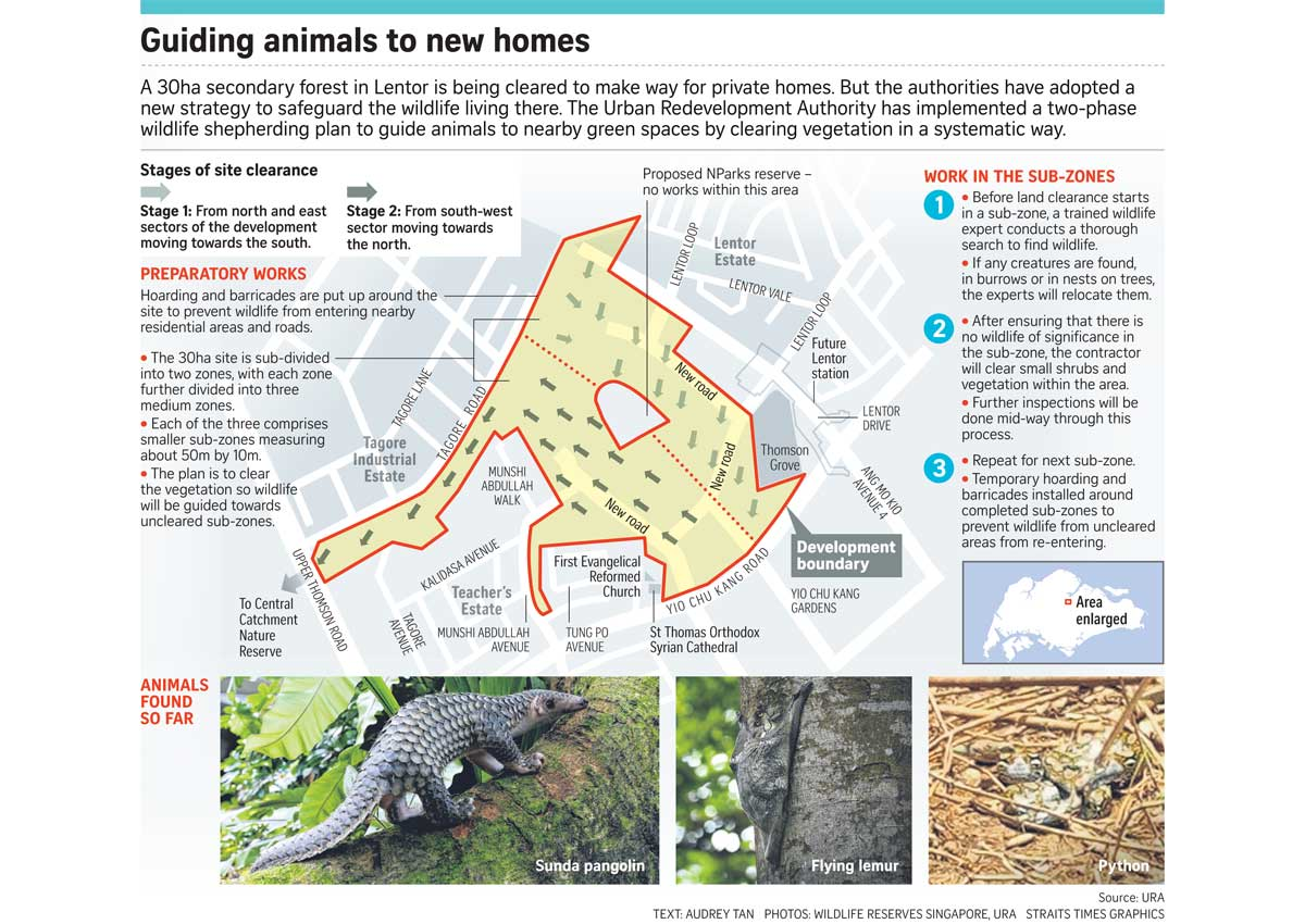 plan to save wildlife at site marked for housing singapore news