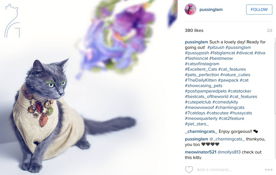3192cdff85e Cat lover rescues dying cat, transforms it into glamour puss with ...