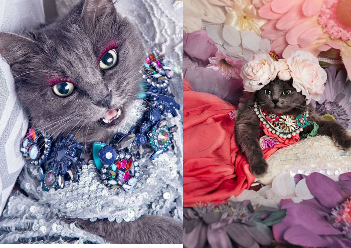 f62cb1bb576 Cat lover rescues dying cat, transforms it into glamour puss with fashion  shoots