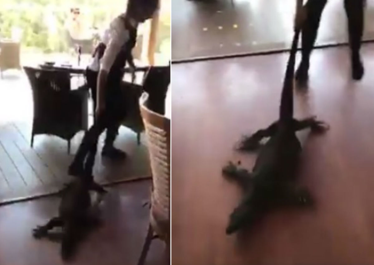 Waitress drags huge monitor lizard by its tail in busy