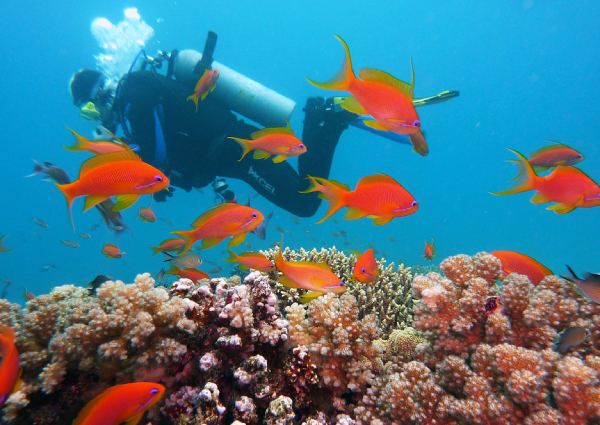 5b27e088ef9 China to repair reefs damaged by its island-building in PH waters ...