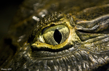 a943522133104c The Crete crocodile is not the first to make an unexpected appearance in  European waters. In 2001