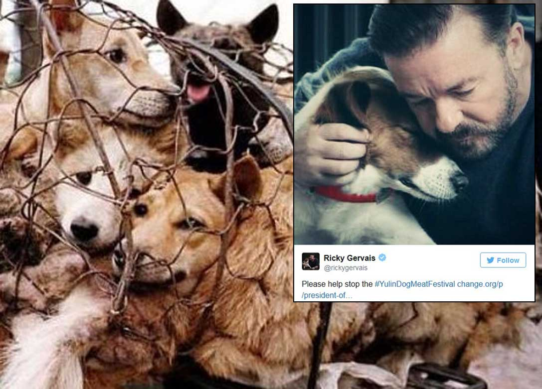Celebrities join campaign to stop dog meat festival in China, Asia ...