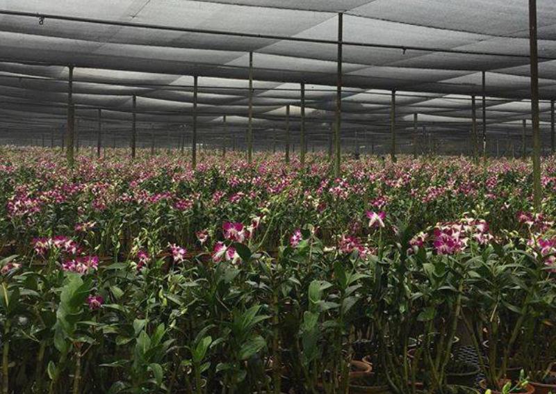 Plant Nurseries In Singapore 2020