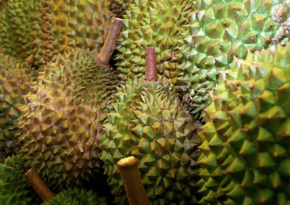 durian delivery pasir ris