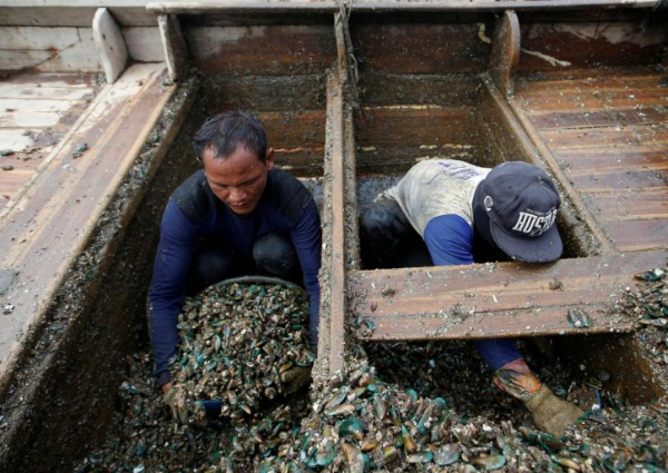 Don't consume fish, mussels from Jakarta Bay because of toxic