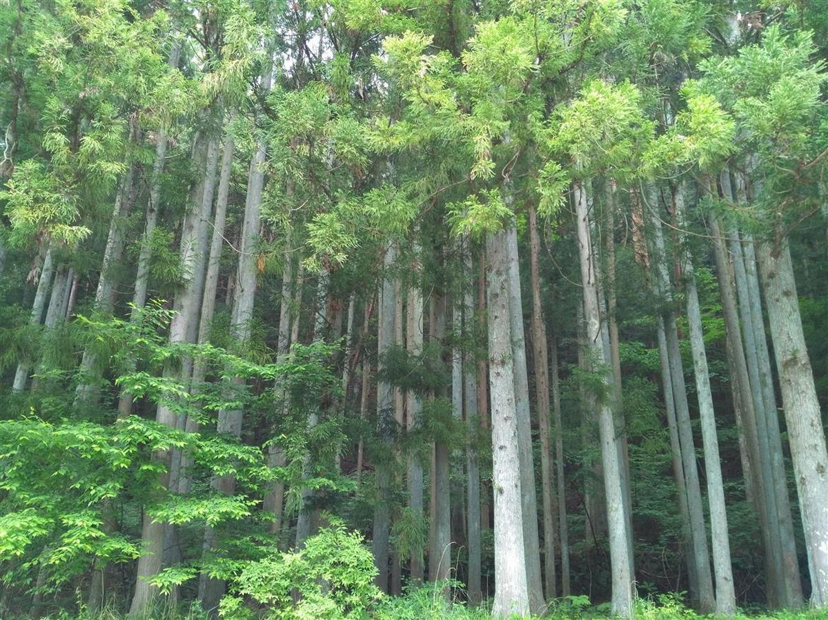End of the road: What is it about Japan's Aokigahara Forest