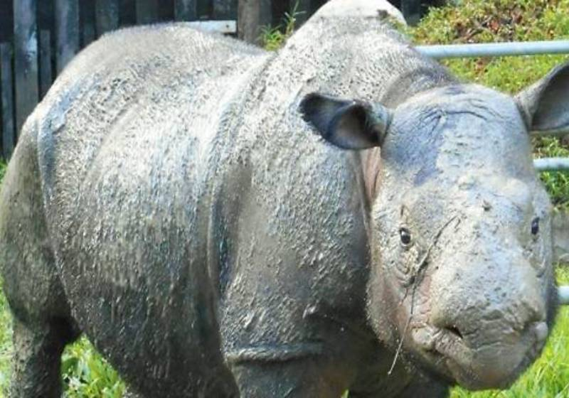 WWF: Sumatran rhino Iman's death a desperate wake-up call to all