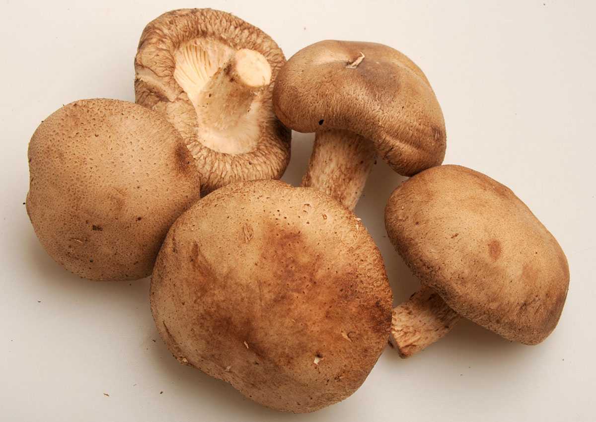 phd thesis on button mushroom The button mushroom is a delicious edible mushroom, and can be used in a wide array of dishes fresh, button mushrooms are excellent on pizzas, salads, stir fries, and stews dried, they can be used to lend a deep, earthy flavor to stews and stuffings.