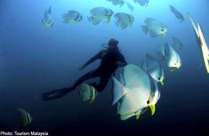 Tioman diving tragedy: Deaths should 'never have happened