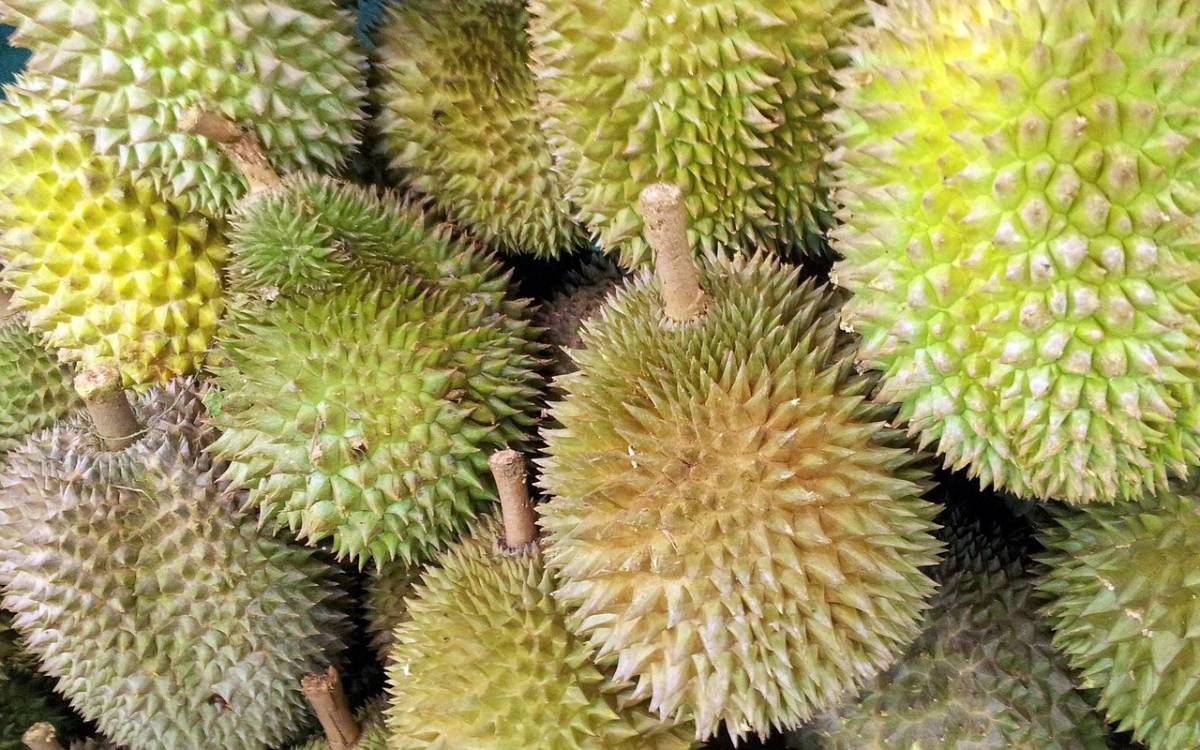 Have you ever wondered if eating durian is healthy
