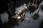 Storm-hit Hollywood rolls out red carpet for nailbiter Oscars night - 6