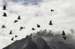 Mount Sinabung erupts - 17