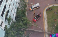 Boy sent to hospital after being struck by falling tree
