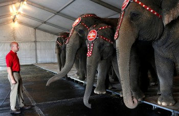 Ringling Circus retires elephants after 145 years