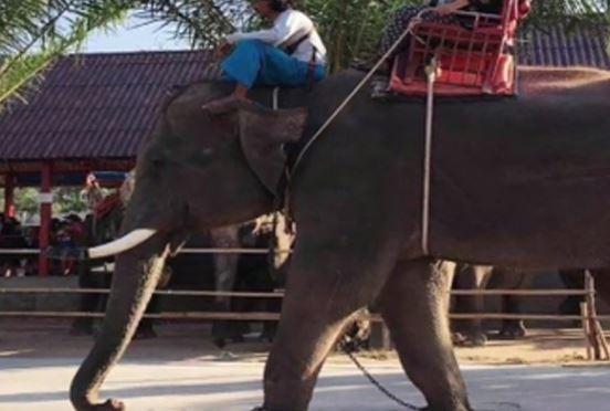 Gajah mengamuk