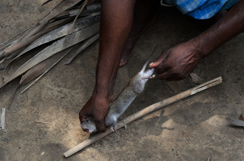 The 'Rat Eaters' of Bihar: India's poorest people?, Asia