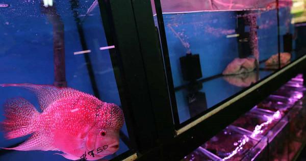 Pet fish shops struggling to hook customers, Singapore News - AsiaOne