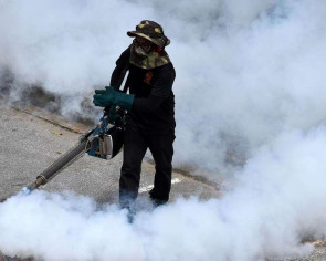 Number of dengue cases may surge this year: NEA