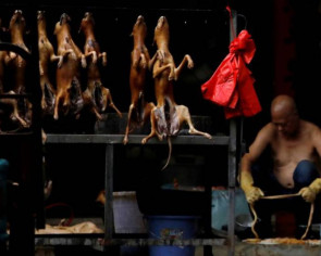 Shenzhen move to ban eating cats and dogs welcomed by animal rights activists