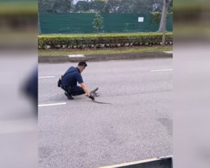 This made my day: Policemen rescue monitor lizard from becoming roadkill near Nicoll Highway