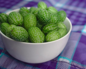 Tiny cucamelons may be the world's cutest fruit