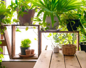 10 good luck plants for your home