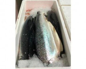 SFA recalls Atlantic salmon from Norway after listeria monocytogenes was detected in sample