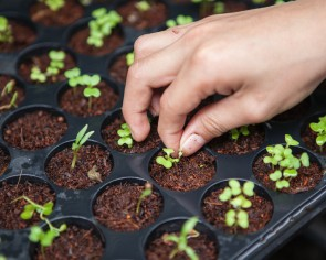 From Singapore to India, urban farms sprout up as coronavirus leaves Bollywood celebrities with thyme on their hands