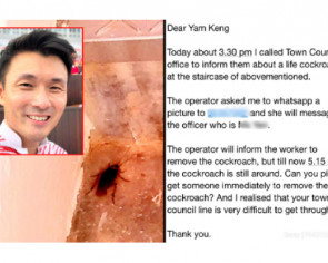 Tampines resident emails MP Baey Yam Keng for help -- over a cockroach