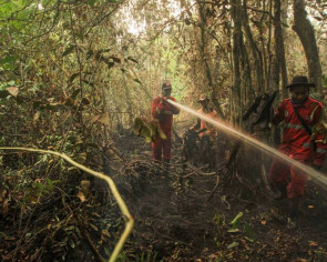 Look at the Amazon, not us: Indonesia claims handling forest fires better than other nations