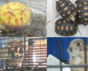 Man fined $41,000 for having 32 wild and endangered animals in Toa Payoh flat